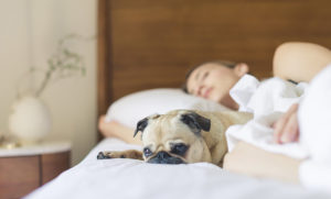 What problems do pugs have? Pug Health Guide