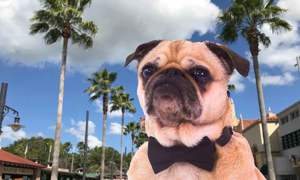 How Much Do Pugs Cost in California